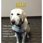 ollie-featured