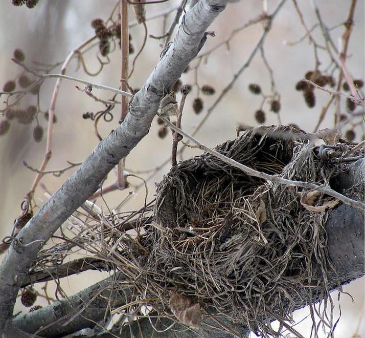 Things to Remember when Suffering From Empty Nest in Scottsdale, AZ